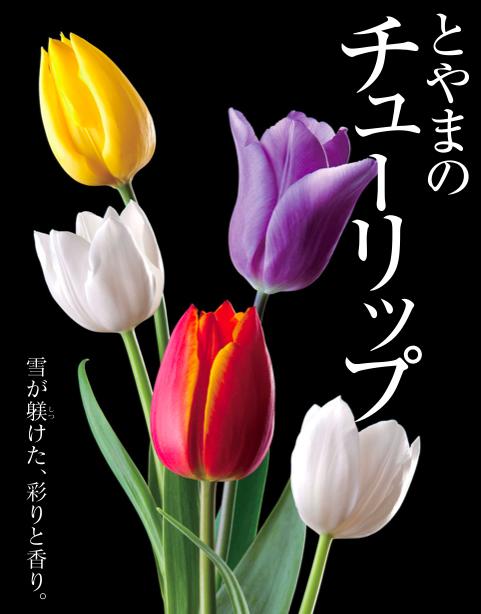 http://www.toyama-brand.jp/file_upload_p/100036/_original/100036_01.jpg