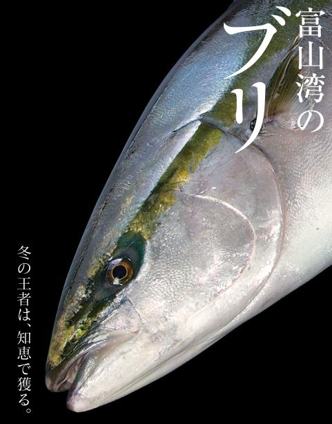 5. 富山湾のブリ